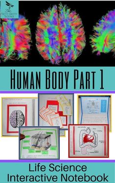 Human Body Part 1: Life Science Interactive Notebook includes the following concepts: The Skin, Muscular System, Skeletal System, Nervous System, Digestive System