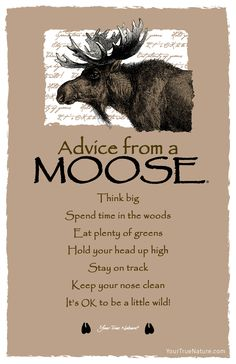 Each postcard says: Advice from a Moose Think big Spend time in the woods Eat plenty of greens Hold your head up high Stay on track Keep your nose clean It's OK Animal Spirit Guides, Spirit Animal, Animal Medicine, Power Animal, Advice Quotes, Advice Cards, True Nature, Animal Totems, Statements