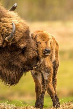 Love #love #animals