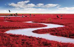 Spiaggia Rossa in Cina