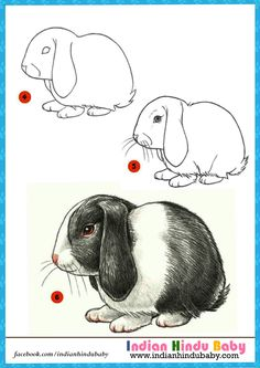 Rabbits are nocturnal which means they are active at night time. Teach your kid to draw and paint bunny with simple drawing tips