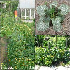 Blog a vegyszermentes kertészetről. Biokert. Konyhakert vegyszermentesen. Bevált praktikák a kertben. Outdoor Structures, Plants, Blog, Gardening, Lawn And Garden, Blogging, Plant, Planets, Horticulture