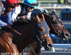 American Anthem and Mor Spirit Race Horses, Horse Racing, Chasing The Sky, American Anthem, Thunder And Lighting, Thoroughbred Horse, All Hero, Fine Boys, Cool Names