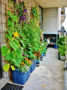 Even simple applications can be colorful and attractive! ~ Easy Edible Landscapes Miami