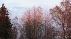 puut joita auringon lasku värjää