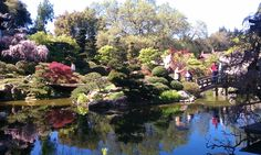 If you haven't been to the Hakone Japanese garden in Saratoga, CA go now!  Went last weekend, and all the trees are in bloom... just awesome.
