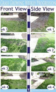 How to grow grass in 3 weeks. Scotts Turf Builder Growing Grass