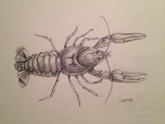 crayfish Old And New, Cool Drawings, Fun, Musica, Hilarious