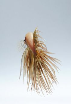 Nice shot...crowntail betta from back