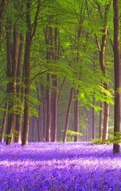 Micheldever Wood, Hampshire, England I just want to walk through these woods and say The Lady of Shalot over and over to myself and be left alone to dream for hours.