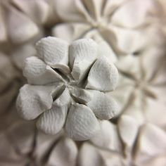Having fun with a macro lens. You can see my thumb print on each petal. These little flowers are the size of a thumb nail! #porcelain #flowers #clay #ceramics #handpinched #petals #london