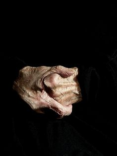 Hands of Louise Bourgeois by Alex Van Gelder, 2010.