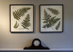 How to make DIY pressed fern botanical frames step by step tutorial instructions