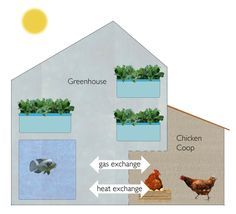 integrating poultry with aquaponics . not sure why I'm pinning this. Maybe some day for my farm I can build it :) Aquaponics System, Aquaponics Greenhouse, Hydroponic Gardening, Organic Gardening, Aquaponics Plants, Aquaponics Supplies, Greenhouse Ideas, Permaculture, Cool Things To Make