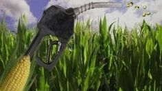 – ¿Alimentos o combustibles? La UE pone el tema sobre el tapete