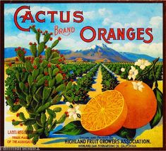 Cactus Brand Oranges (Oranges) 1900 - Highland Fruit Growers Association - Highland, CA