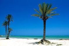 Seguia Beach, Djerba, Tunisia, Africa