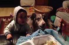 Esta madre trata de que su bebé diga mamá la reacción del perro hizo la escena VIRAL #viral