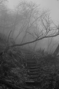 Haunted Woods, hmm... I wonder where those steps lead to...