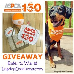 Penny wants you to join us in Celebrating the ASPCA 150th Anniversary and #ASPCA150 Days of Rescue #GIVEAWAY #adoptdontshop #animalwelfare #rescuedog #pets  http://www.lapdogcreations.com/2016/05/aspca-celebrates-150-years-with.html