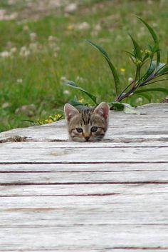 Chaton ~ Kitten