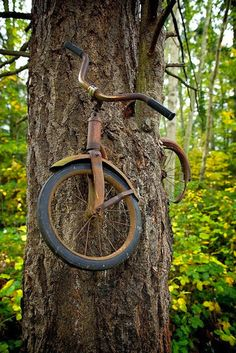 A boy left his bike chained to a tree when he went away to war in 1914. He never returned, leaving the tree no choice but to grow around the bike. This bike has been there for 98 years now.   By Todd Bates on Flickr