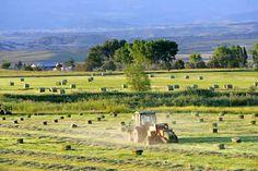 Livestock Ranching | Colorado Cattle Ranching Colorado cattle ranches for sale ranching ...