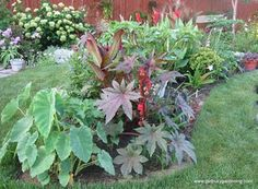 How To Grow Castor Bean Plant From Seed Plants: Castor bean in tropical garden Tropical Landscaping, Outdoor Landscaping, Tropical Garden, Tropical Plants, Outdoor Gardens, Landscaping Ideas, Outdoor Decor, Bonsai Plants For Sale, Bonsai Plants Online