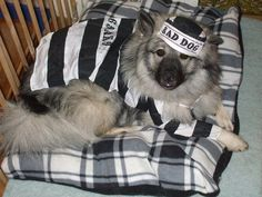 convicted canine costume