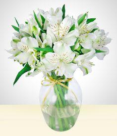 Astromélias - Para alguém querido: Vaso com astromelia branca