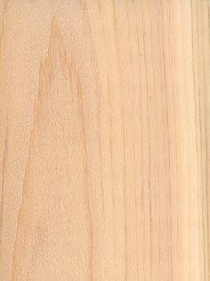 Northern White Cedar (Thuja occidentalis)