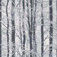 Arthouse Frosted Wood Glitter Black and White Silver Birch Tree Wallpaper 670200 in Home, Furniture & DIY, DIY Materials, Wallpaper & Accessories | eBay
