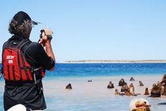Observando la fauna en Bahía Bustamante.