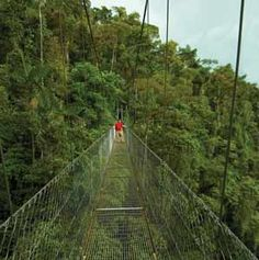 Hikers on the Arenal Hanging Bridges in the rainforest near Arenal Volcano in Costa Rica....OMG