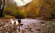 Smudge, Scotch Gill, Wansbeck River, Morpeth, Northumberland