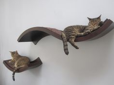 cat shelves for walls | Cat Shelves by jen.marchman