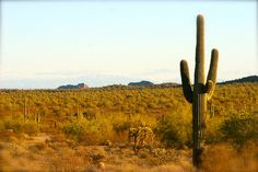Amazing Sonoran Desert!
