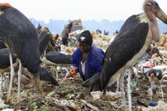 A woman whose livelihood depends on selling recyclable wastes collects trash from a dumping site while surrounded by Marabou storks on the outskirts of Kampala, Uganda March 31, 2015. REUTERS/James Akena