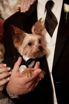 Ring Bearer's tuxedo fits perfectly!