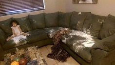 Your sofa won't look like this when you get back from work.