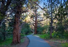 Spring and summer hiking and biking trails in Big Bear, CA.