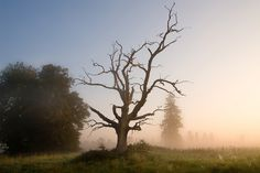 One Dead Tree (20 photos) - My Modern Metropolis