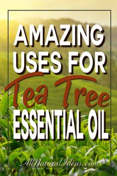 Tea tree essential oil has benefits that make it a popular ingredient in health and beauty products. Let's look at some of the tea tree essential oil uses.