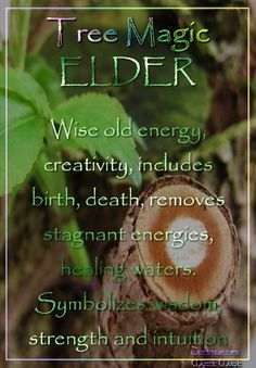 °ELDER ~ Wise old energy, creativity, symbolism includes birth, death, removes stagnant energies, healing waters. Symbolizes wisdom, strength  intuition