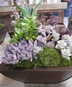 Succulent Arrangement from Rolling Greens Nursery, Costa Mesa location ~ Cindy from The Succulent Perch    design: Rolling Greens Nursery  photo: Cindy Davison