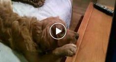 Quando o Dono Percebeu o Que o Seu Cão Estava a Fazer, Ele Teve De Filmar