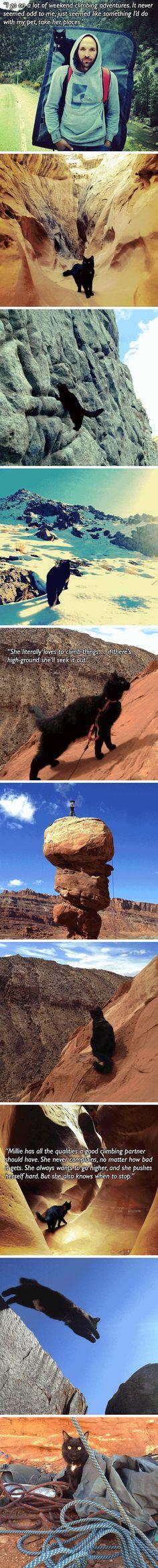Meet Millie, the mountain climbing cat. ...Absolument pas pour mes chats, ni pour moi d'ailleurs !...