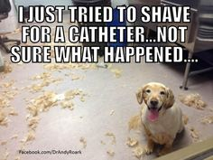 Why vets should always have their vet techs shave the patient...