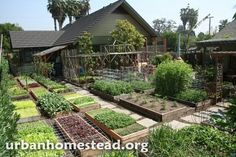 How to Grow 6,000 Lbs of Food on 1/10TH Acre