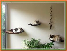 (paid link) Buy cat hammock online to enjoy Groceries & Pets discounts and Pet Supplies deals! Read reviews on cat hammock offers and make ... #cathammock Cat Window Hammock, Cat Window Perch, Cat Perch, Cat Hammock, Cat Climbing Shelves, Cat Wall Shelves, Shelf, Dog Friendly Backyard, Kitty Cats